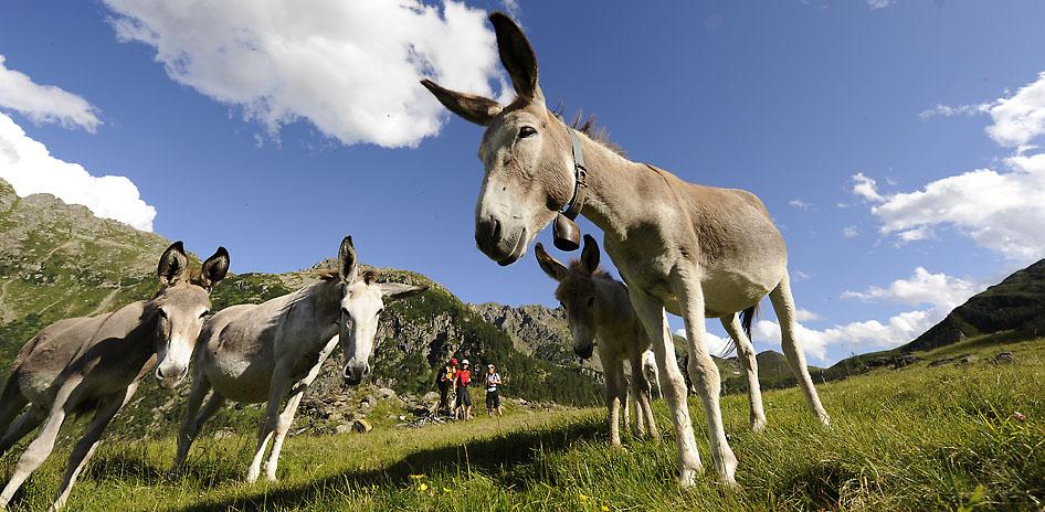 Alpencross Via Migra Dolomiten Transalp