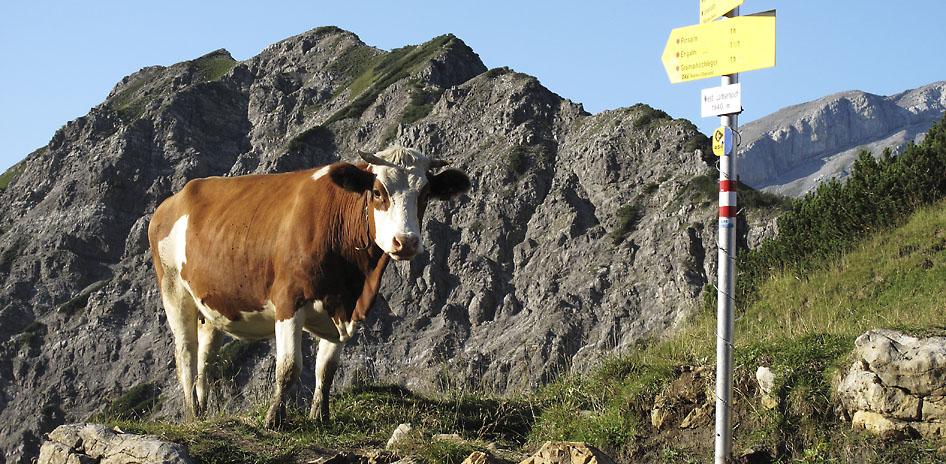 Alpencross Via Migra Transalp